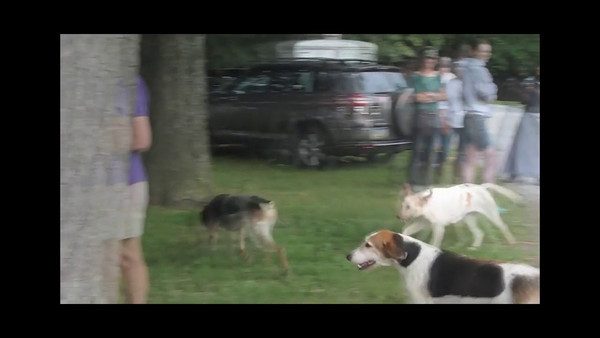 Video - 2011 Cheshire Foxhounds Camp