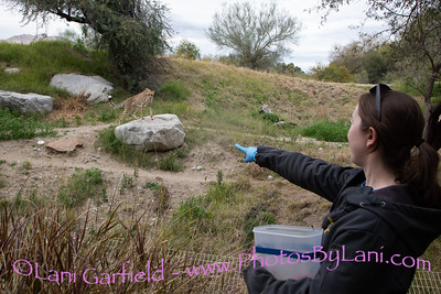 Behind the scenes at The Living Desert by Lani