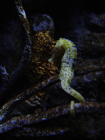 New York Aquarium