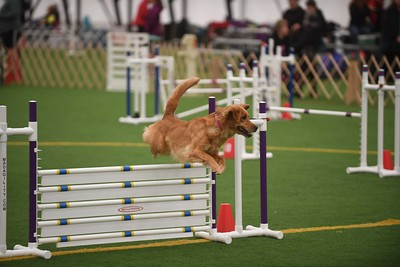 """Sunday Excellent Standard 20"""" Group 2"""