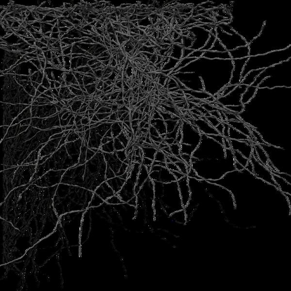 branch_backdrop_01_by_brokenwing3dstock-d6ejveb.png