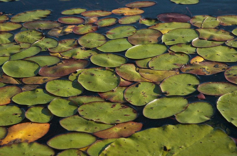 Okavango Delta - Leslie Rowley