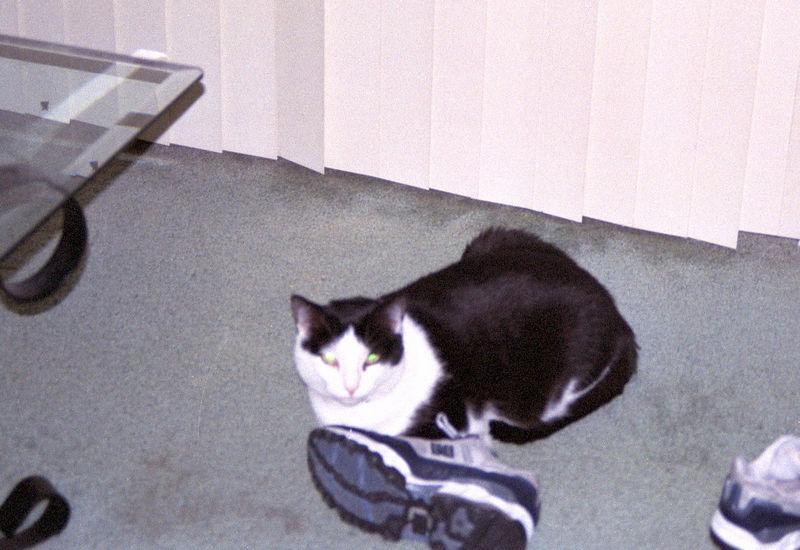 2003 12 - Cats 33.jpg