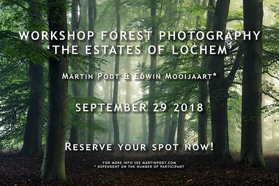 2018-09-29 Workshop forest photography