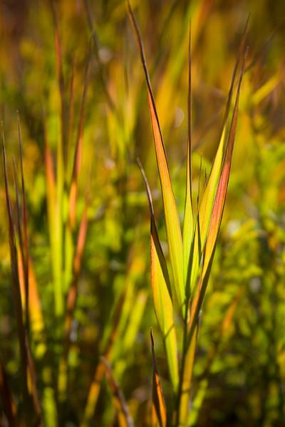 Colorful Grasses
