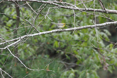 Spring Bird Count 2013