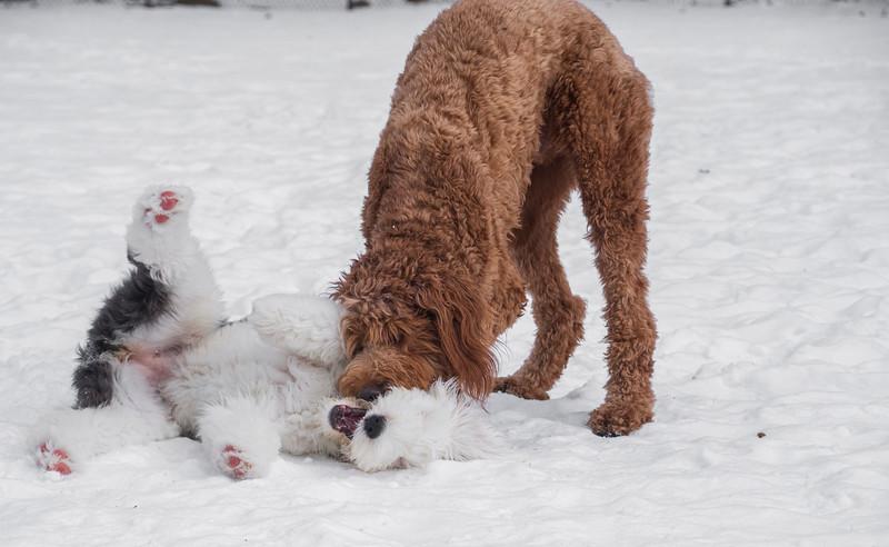 London-calvin-snowplay4.jpg