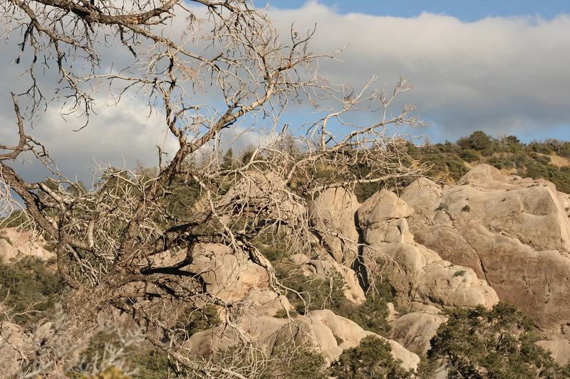 trees and rocks.jpg