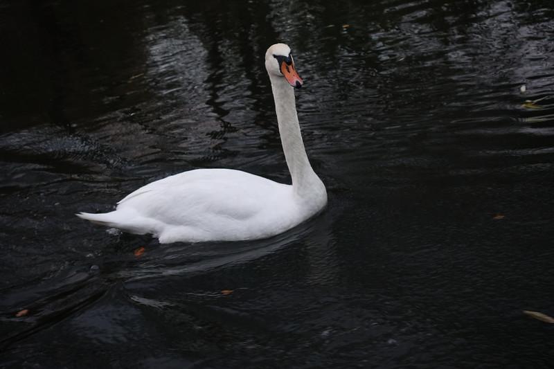 River Avon_Stratford Upon Avon_England_GJP03402.jpg