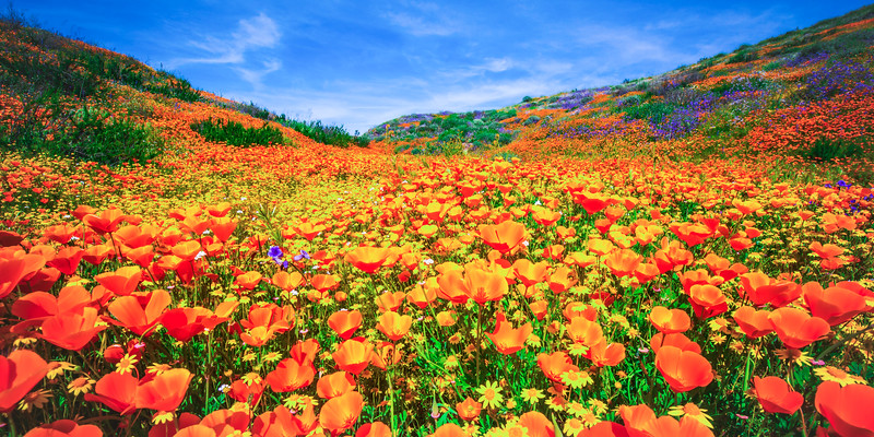 Malibu Spring Symphony Superbloom #11: Malibu California Superbloom Wildflowers  Elliot McGucken Malibu Fine Art Landscape Nature Photography Prints & Luxury Wall Art