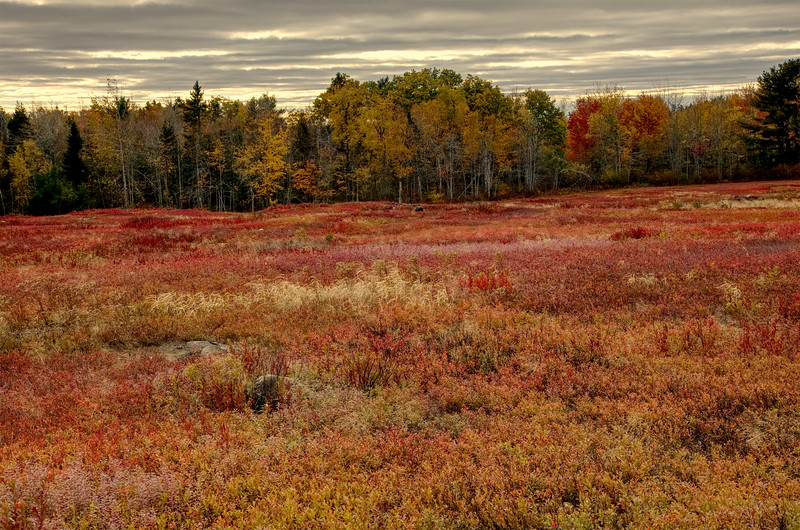 Autumns Red Acadia National Park.jpg
