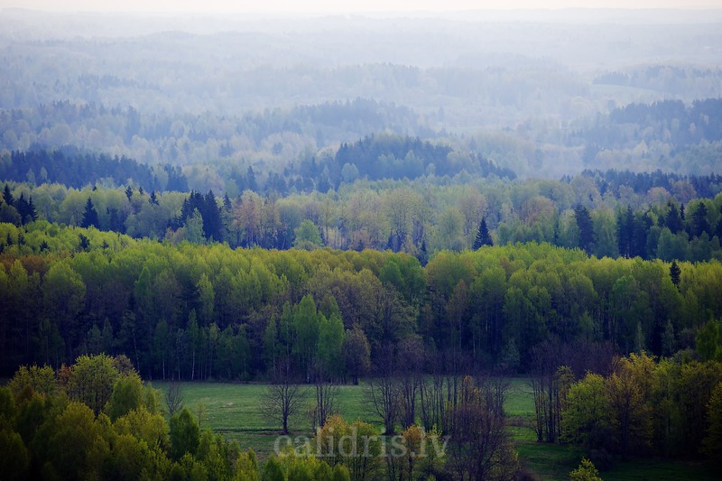 A spring view over forest in Latgale from Liepukalns tower