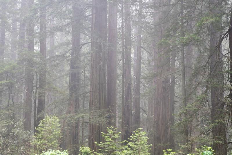 redwoodsFin29-1228.jpg