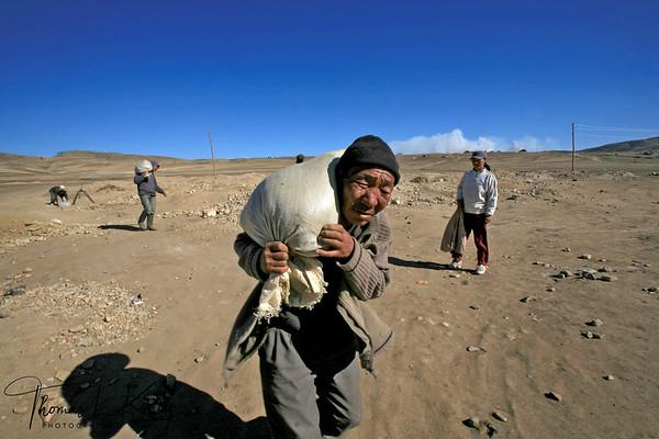 Ninja Miners of Mongolia