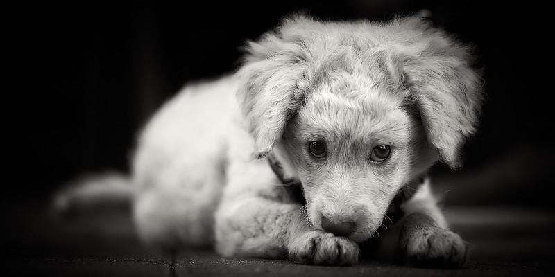 puppymar1317 12.jpg