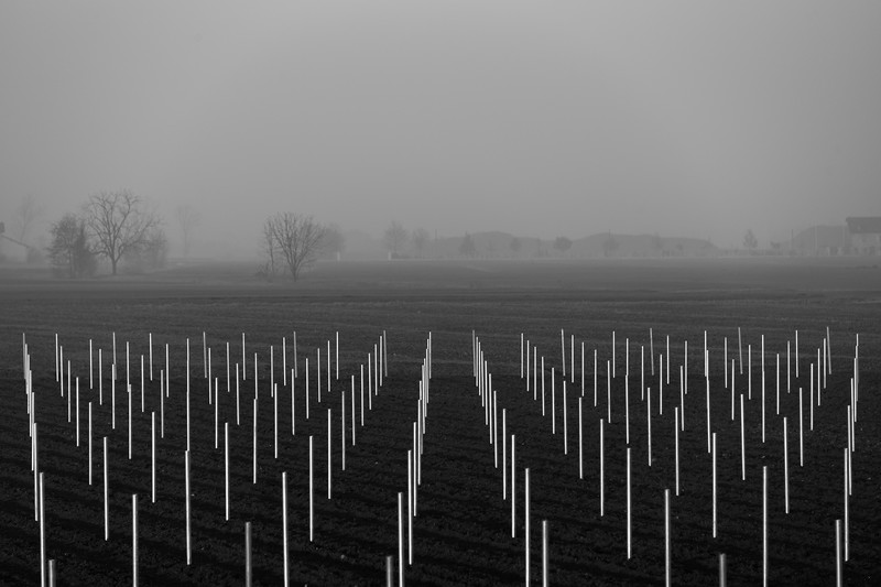 Poles - Cadelbosco di Sopra, Reggio Emilia, Italy - December 9, 2018