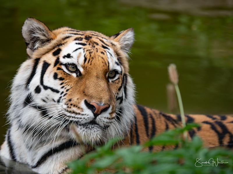 130719_Wildlife Paradise_2293.jpg