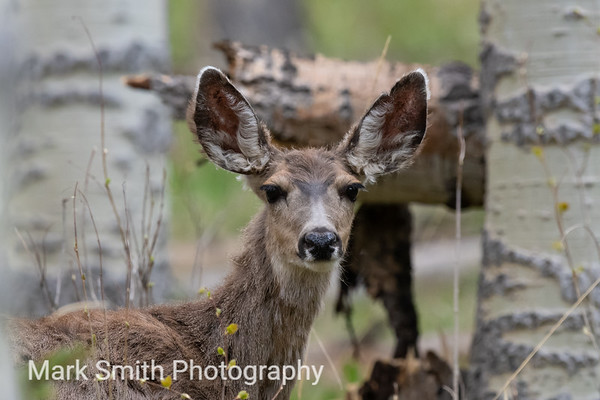 Deer Image Gallery
