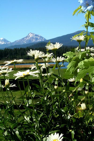 spmtns-and-daisies_6020.jpg