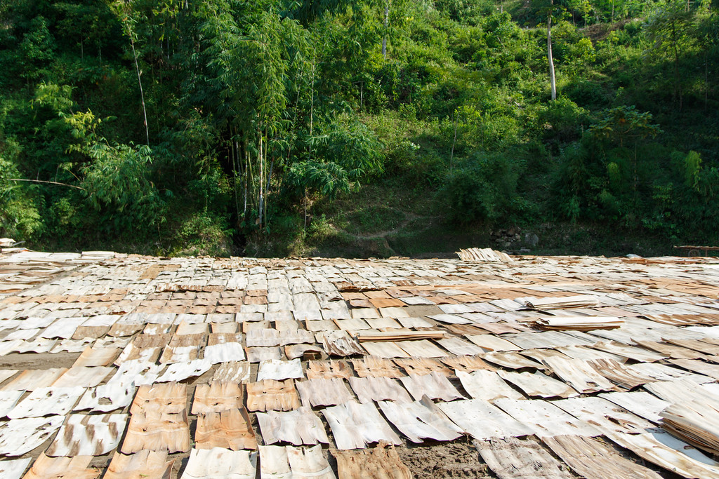 Wood veneer drying in Vietnam