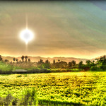 Napa Country Sunset