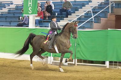 173 - Walk/Trot Saddle Seat Pleasure, Open Stake