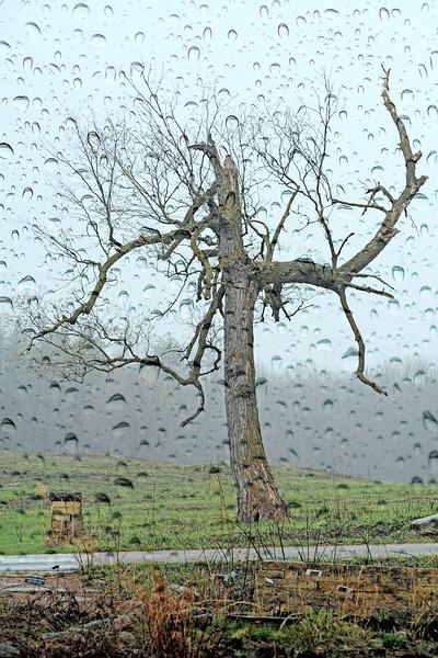 Tree of Council 3.jpg