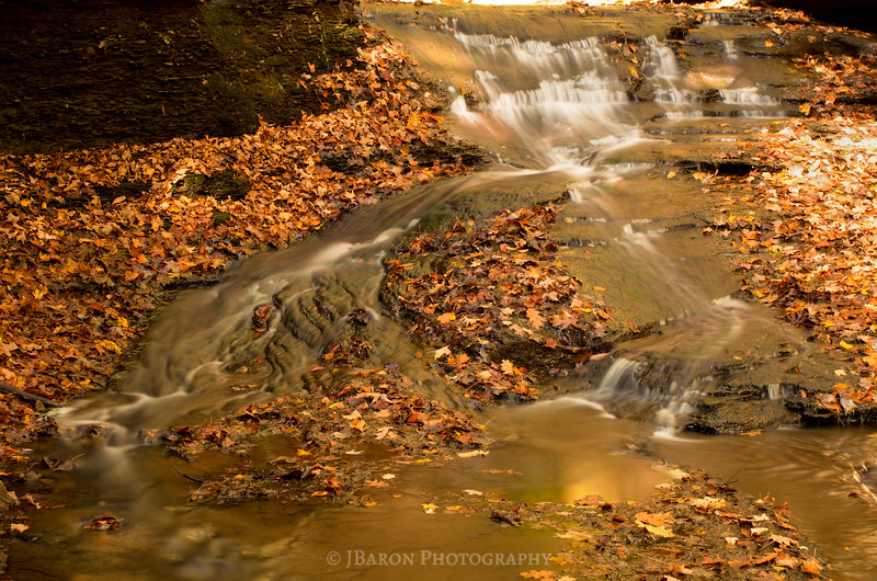 Fallen Leaves and Flowing Water