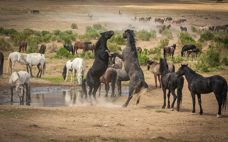 horse 12.jpg