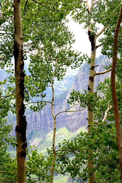 A View Through the Aspens