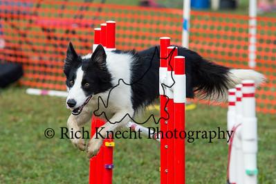 German Shepherd Dog Training Club September 21-22