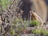 Marmot Malad Gorge