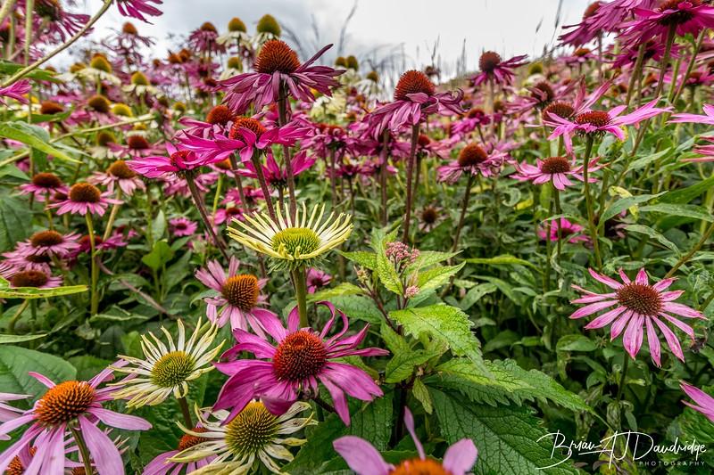 500_Sussex Prairie Gardens-3743.jpg