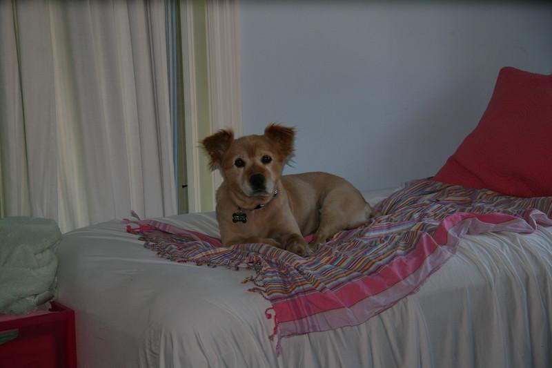 2011-06-06-0008-Leo.JPG