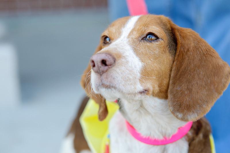 20110312 PetSmart Adoption Event-64.jpg