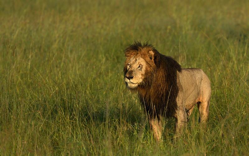 Seeko-Scar-partner-masaimara.jpg