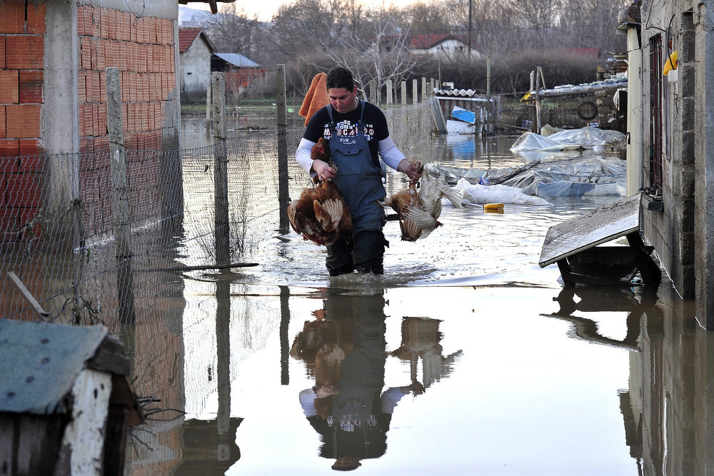 Description of . A man carries chicken out of his flooded home in the town of Sveti Nikole, some 60 kilometers northeast from Skopje on February 26, 2013. Torrential rains in the last three days caused dozens of floods, affecting many villages and towns, and damaging crops. TOMISLAV GEORGIEV/AFP/Getty Images