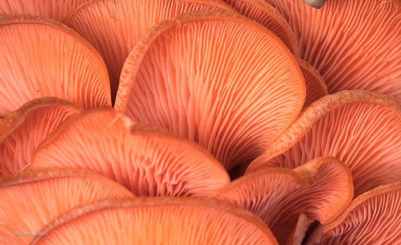 Mushrooms at Mosaic Market in Vienna Virginia