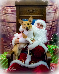 Santa Paws at Paws on Main