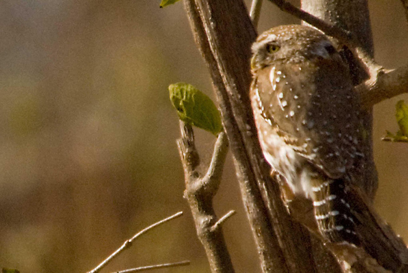 Owl_edited-2.jpg
