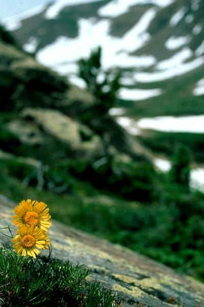 amh FLOWERS (1298).jpg