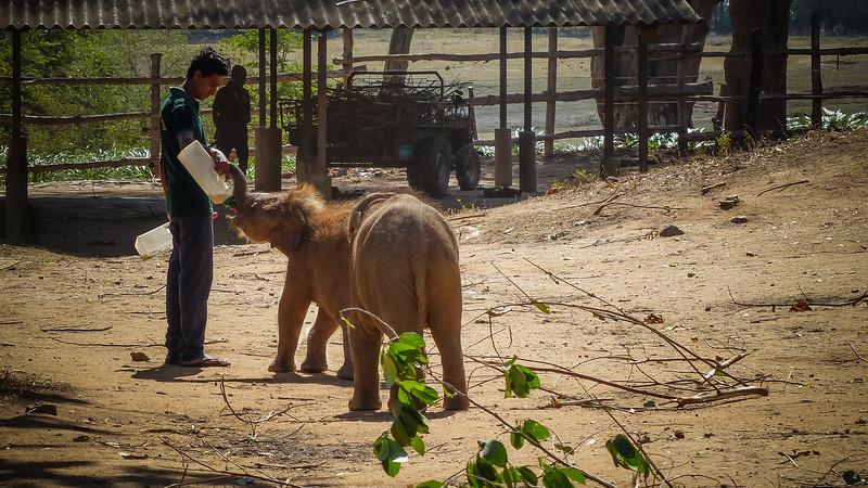 Udawala Elephant Transit Home