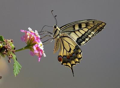 Butterflies Andalucia