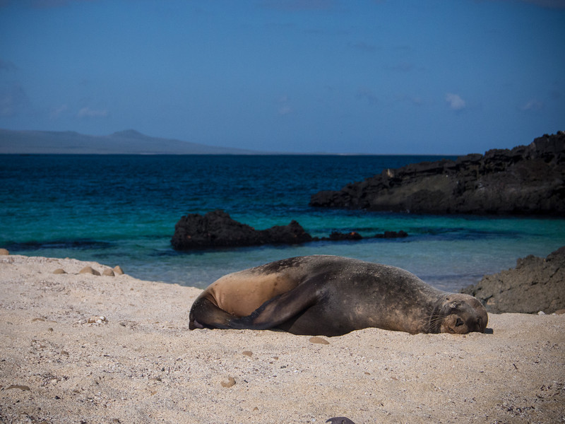 sea lion sleeping on beach on cerro brujo 2.jpg