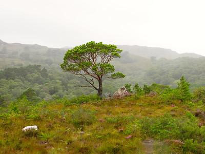 2014: Scotland