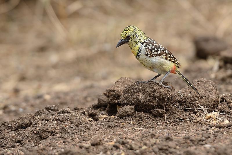 d'Arnaud-Barbet-Serengeti-01.jpg