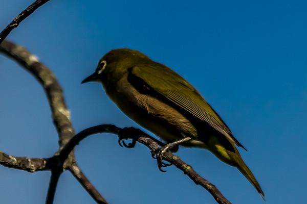 Birds of Hawaiii