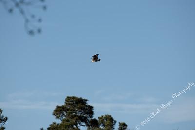 The Lake Osprey