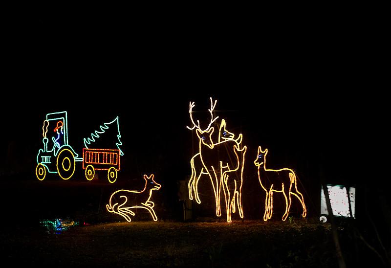 Deer displays by Piwakawaka Photo (18).jpg