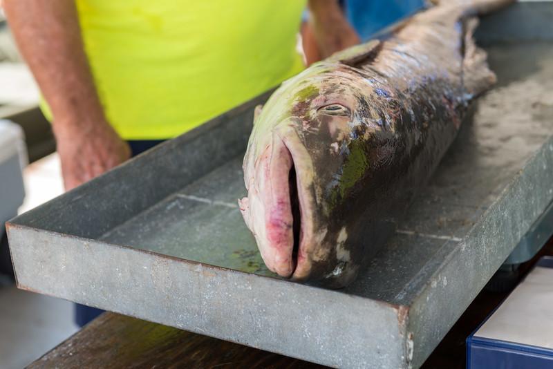 ACGFA Kingfish -0022.jpg